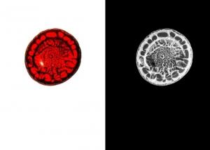 Blutbild. Der Fotograf Kilian Foerster hat menschliches Blut abgelichtet und dann Bild und Negativ nebeneinander präsentiert. In seiner Arbeit setzt er sich häufig mit der... - FOTO: KILIAN FOERSTER